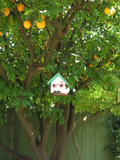 Here's the orange tree that was the inspiration for my book. The birdhouse looks like my husband, Gerry.